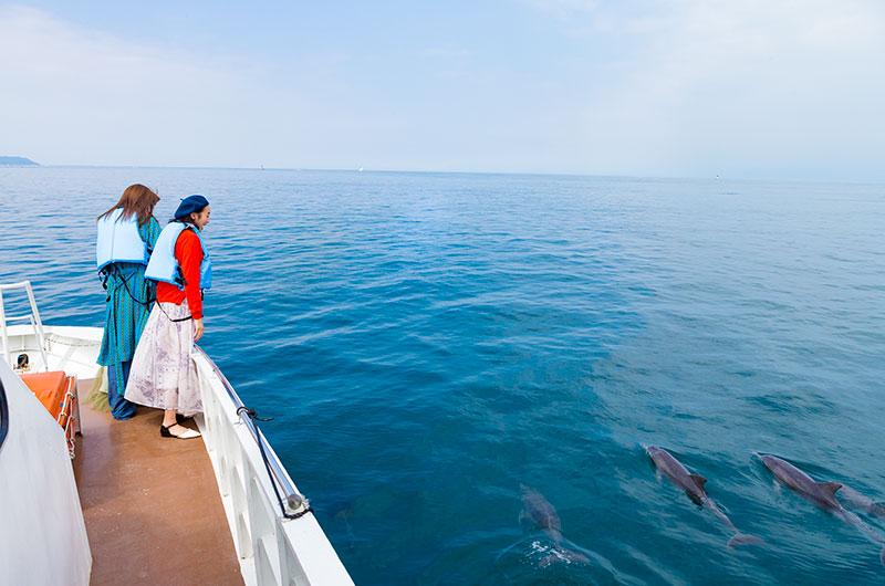 こんなに間近でイルカを見ることができます