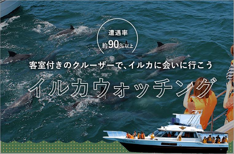 イルカウォッチング